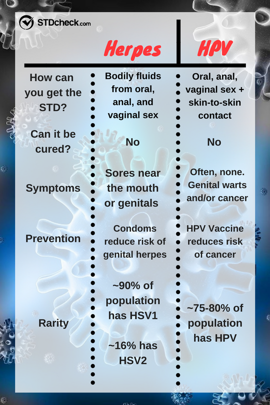 Herpes Vs  HPV: The Complete Breakdown - STDcheck com
